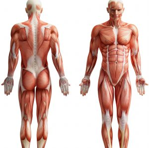 The Instruction Manual For The Human Body – Day 7 – Body Types – (Week 2, Day 2)