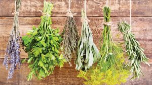 The Instruction Manual For The Human Body – Day 33 – Herbs – (Week 7, Day 3)