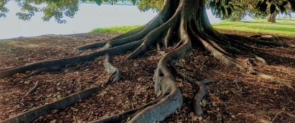 tree485